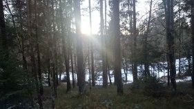 Mystisch im Wald