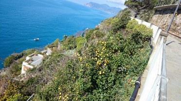 Duftende Zitronenbäume
