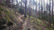 Trails im Wald