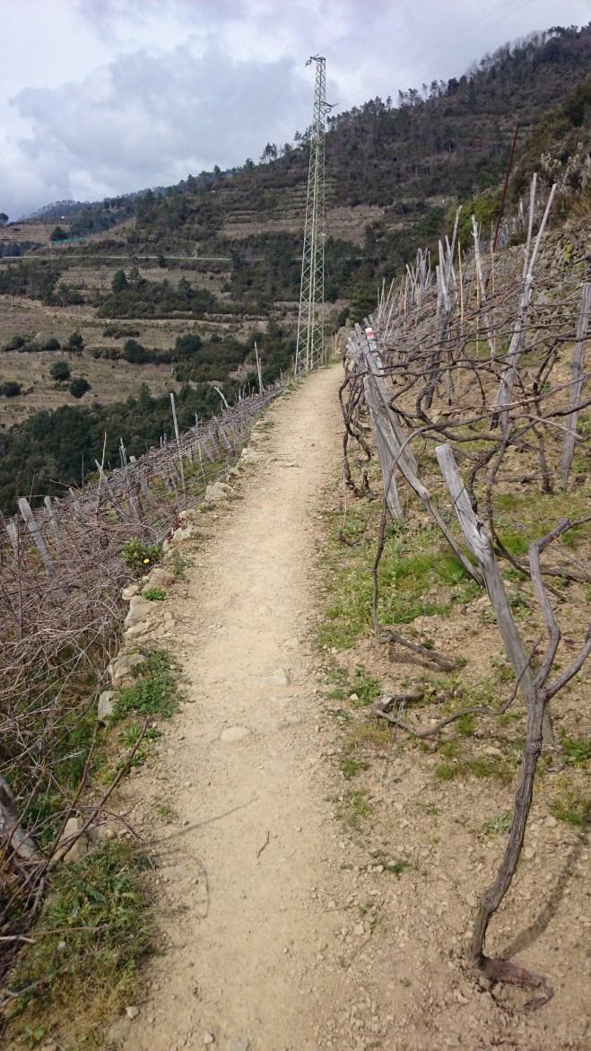 Durch die Weingärten