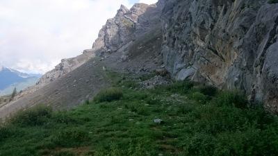 Schafweide am Berg