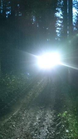 Mit Glühwürmchen durch die Nacht