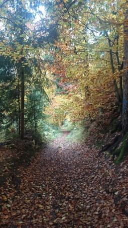 Herbstlich im Wald