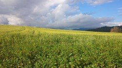 Tolles Farbenspiel der Natur