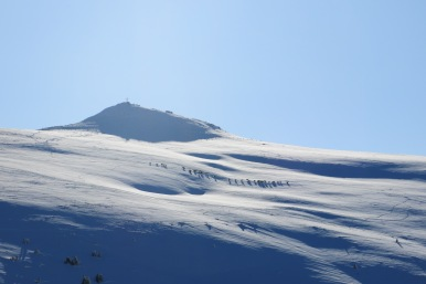 Blick zum Gipfel, davor Gemsen